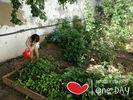 Huerto ecol%c3%b3gico